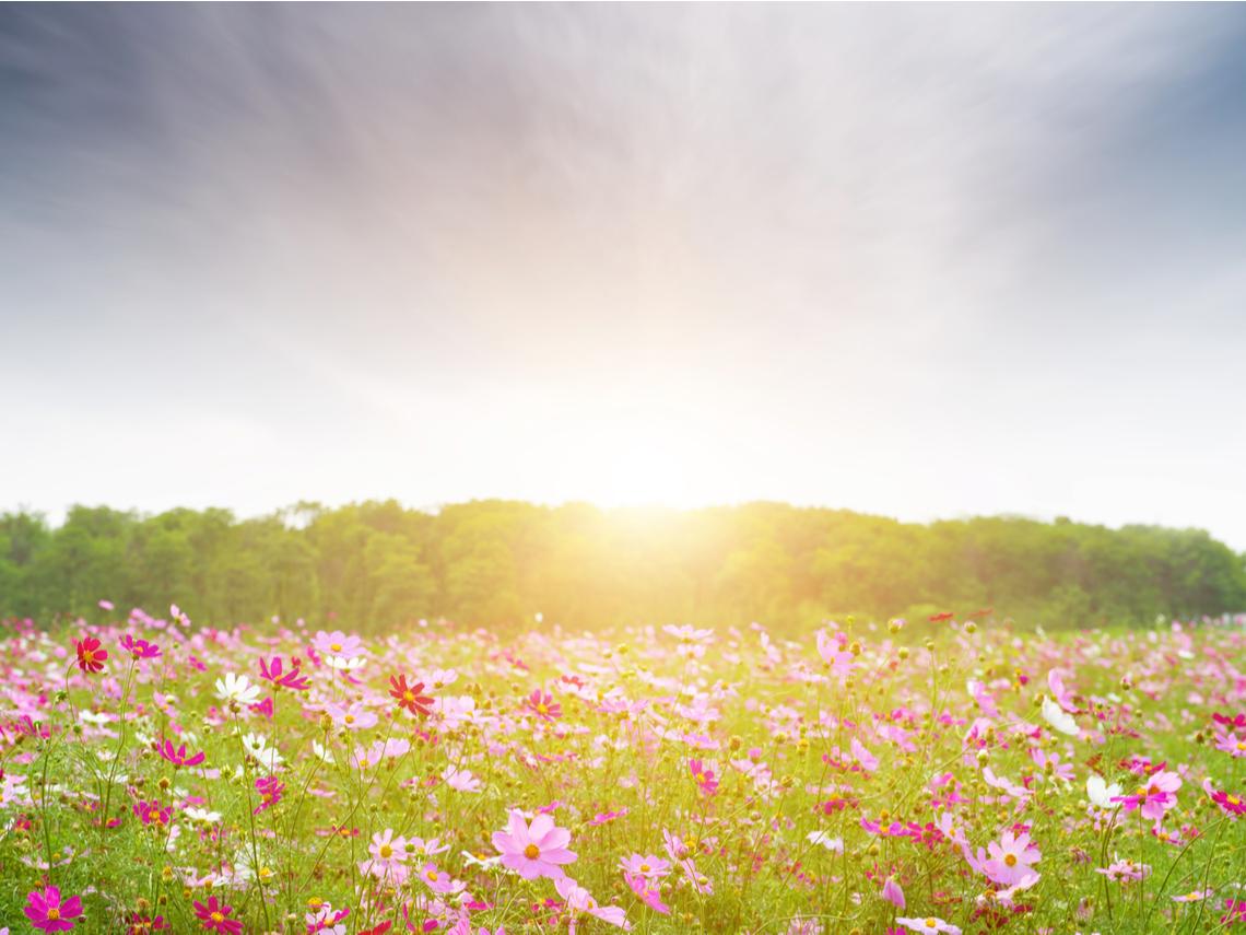 人生在世不過幾個秋,凡事不必太執著!黃越綏:要活得久、活得好,最重要的是健康