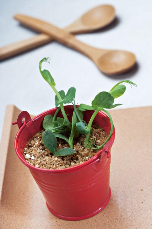 像盆栽的「紅色水桶」,其實是牛肝菌濃湯,以風乾磨菇做出土壤狀,小小淺嘗、回味無窮。