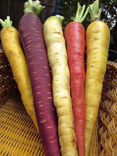 彩色蘿蔔色澤討喜,洗淨生吃最對味。