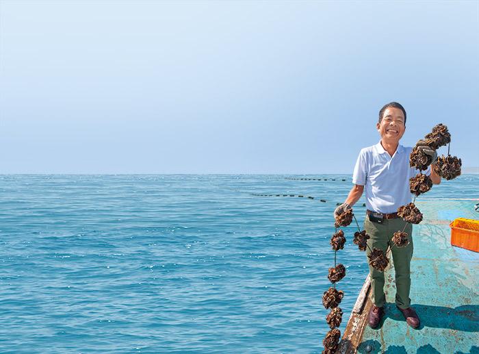 在乾淨海域放養的牡蠣, 上岸便可食用。