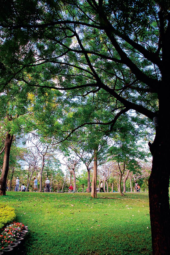 中央公園裡的無垠綠地,柔軟許 多高雄市民的心情。