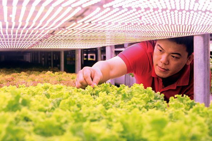 利用規模經濟有效壓低成本,野菜工房靠著價格優勢異軍突起。