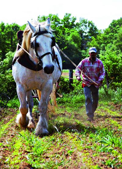Alain Passard捨棄機器耕作,改以傳統耕作法。