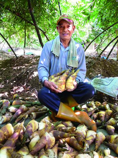 關廟綠竹筍產銷班與 連鎖超商合作,提供 產銷履歷鮮筍。