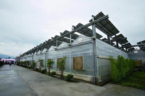 竹田園區種植室上頭 有太陽能板發電,下 面種植有機蔬菜。