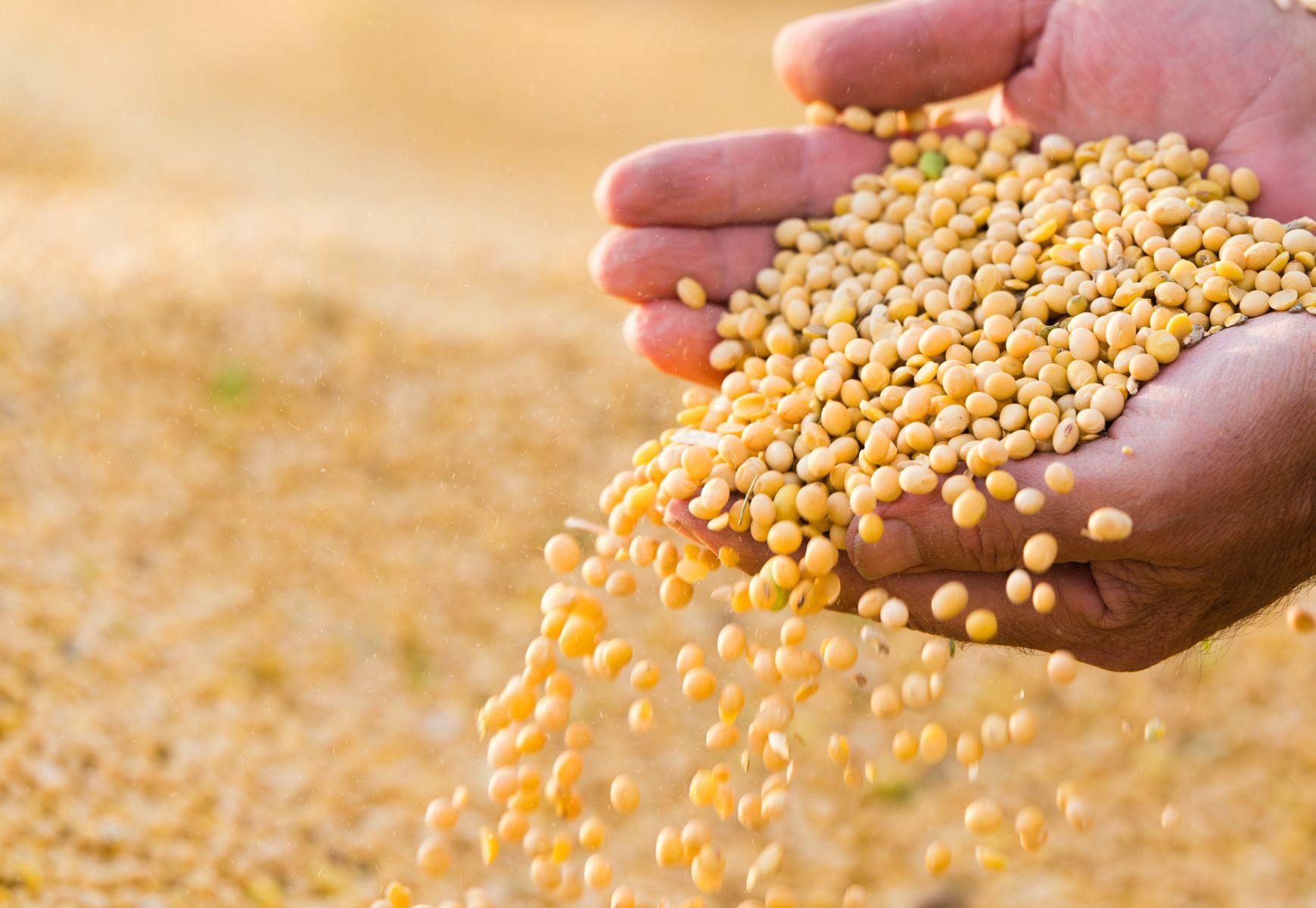 躲避25%高額關稅 美國黃豆現在靠這招進入中國