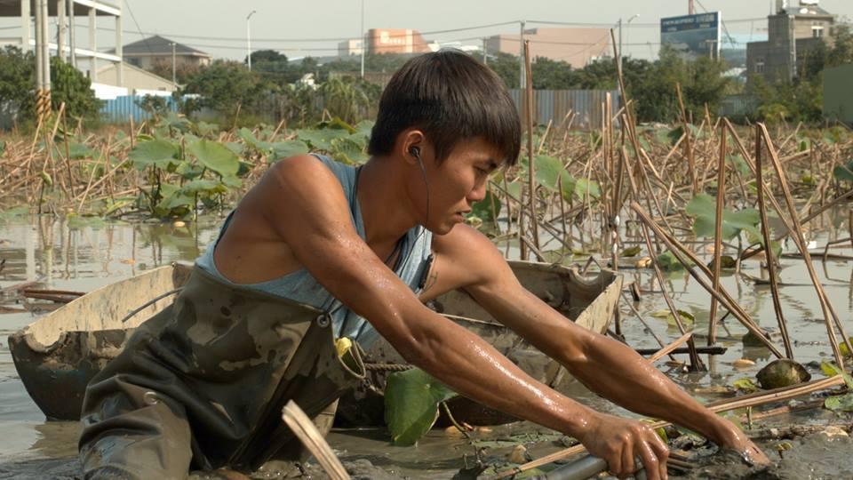 「我不怕苦 只怕賺不到錢」 8年級藕農說出務農心情