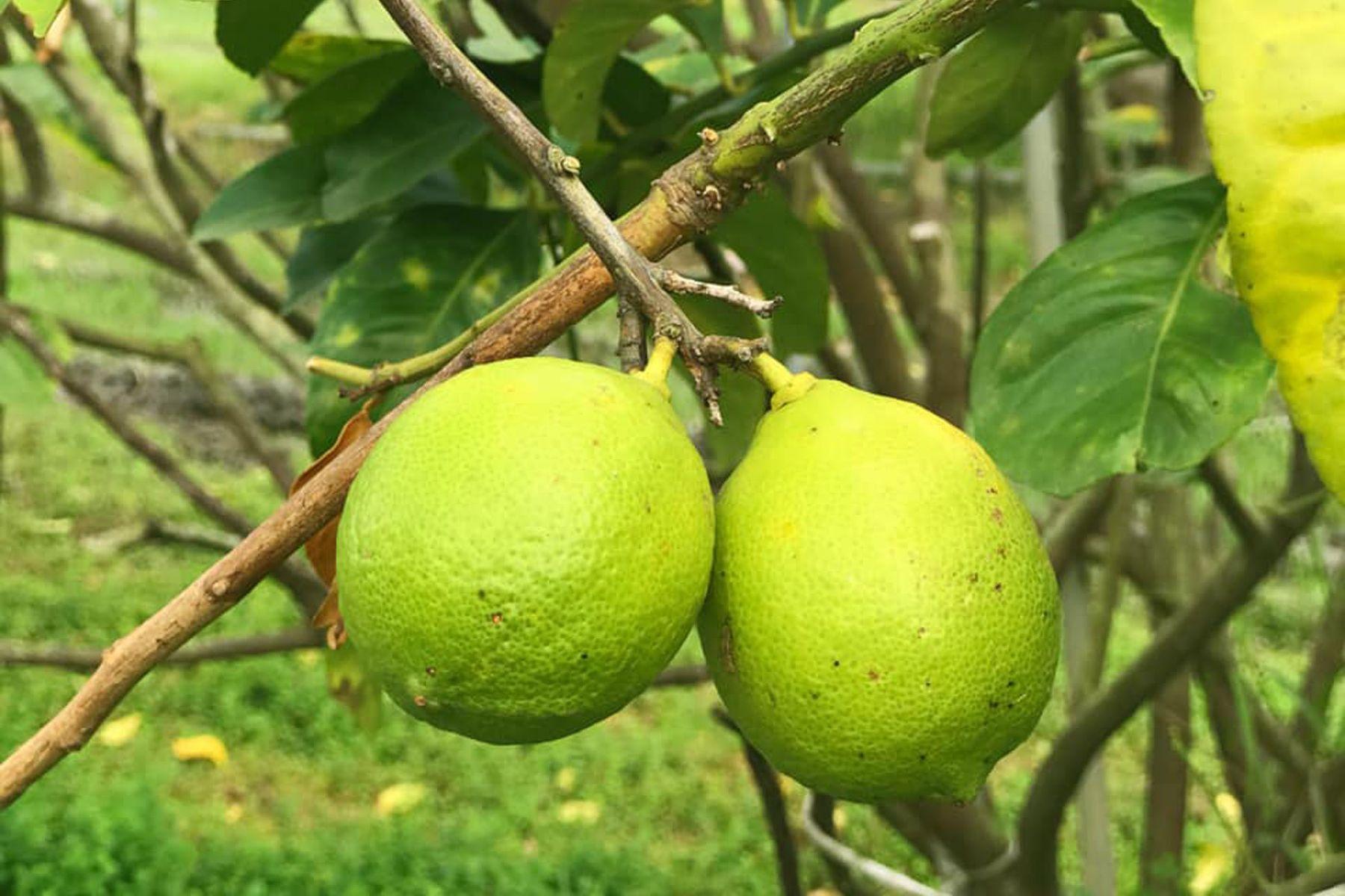 我們多做一點,土地的負擔就少一點...你不知道的檸檬經濟奇蹟