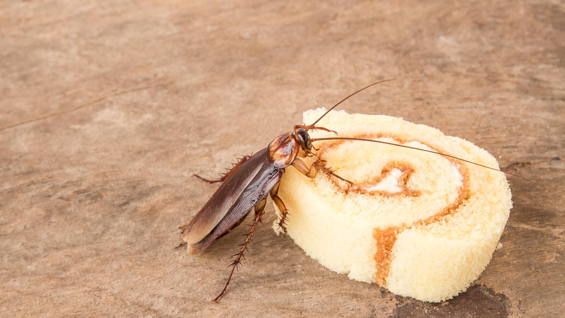 聞過永遠忘不掉 蟑螂味到底是什麼?