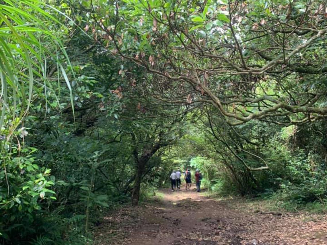 台北近郊森林小徑 謝金河:大屯谷,我心中最原始步道