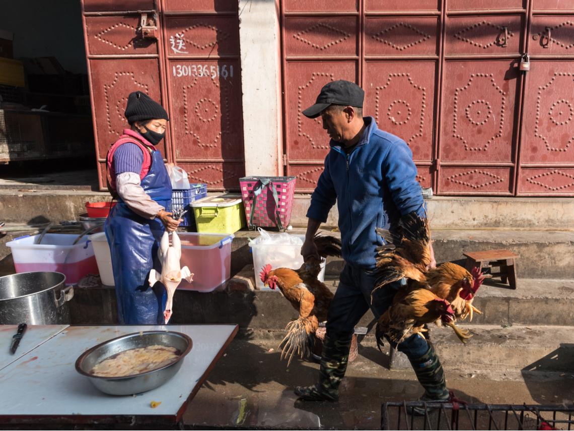全球首例! 中國江蘇省「H10N3禽流感」出現禽傳人
