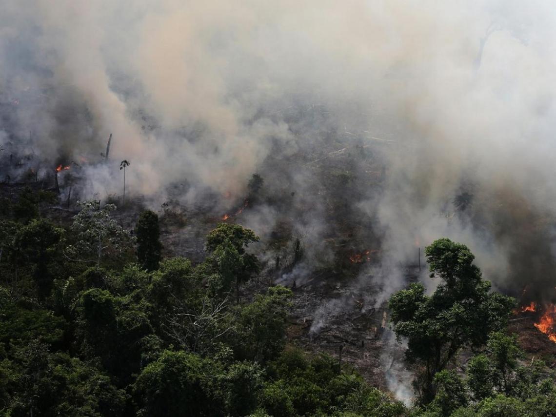 雨林燃燒是物種的「天然更新」? 別傻了!數百年才難得一顆「地球之肺」