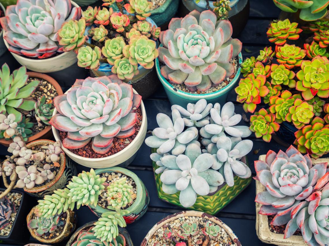 台版「金智英」《植物的翻譯師-許小琬》用多肉植物活出自己的生命姿態