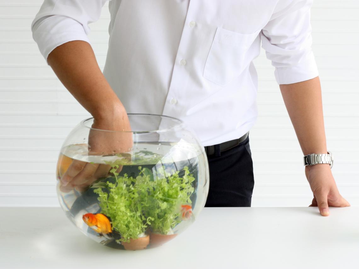 月薪20萬的總經理也得每天幫老闆養魚?做好工作是本份,肯做「雜事」才能升官加薪