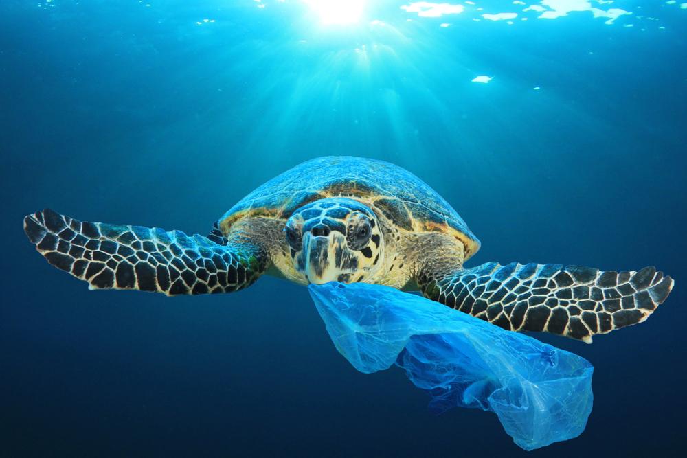 9成海龜死後體內都含垃圾!便利與自私下所製造塑膠袋,是牠們的致命殺手