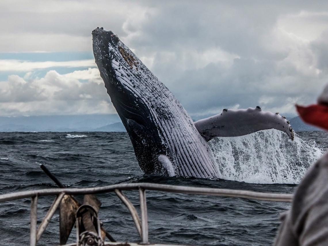 台灣鯨豚種類世界第一 保育迫在眉睫