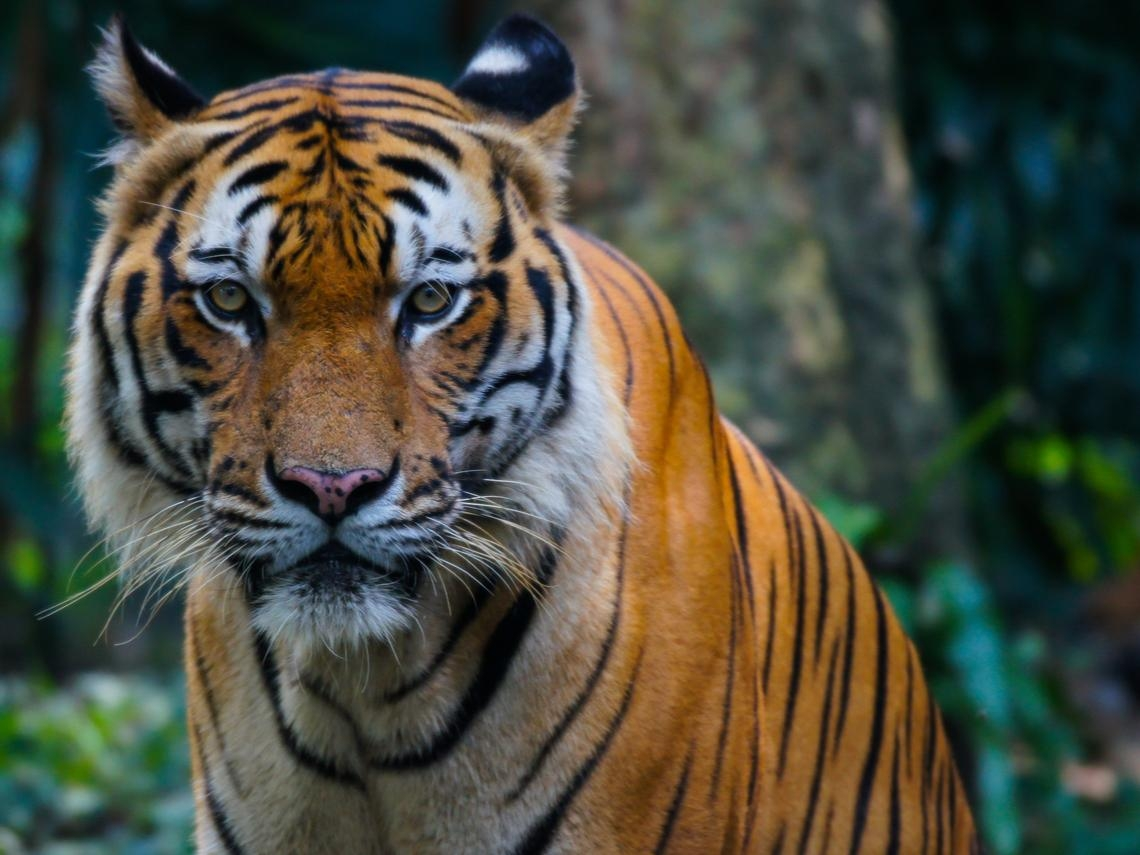 全美4成死亡案例在這裡、連動物園老虎都染疫!紐約做錯什麼淪為武漢肺炎重災區?