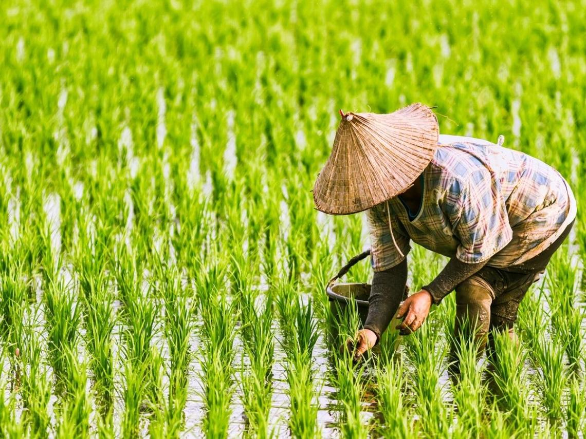 1萬元補助款5月15日前直接入帳  99萬名農民免排隊申請