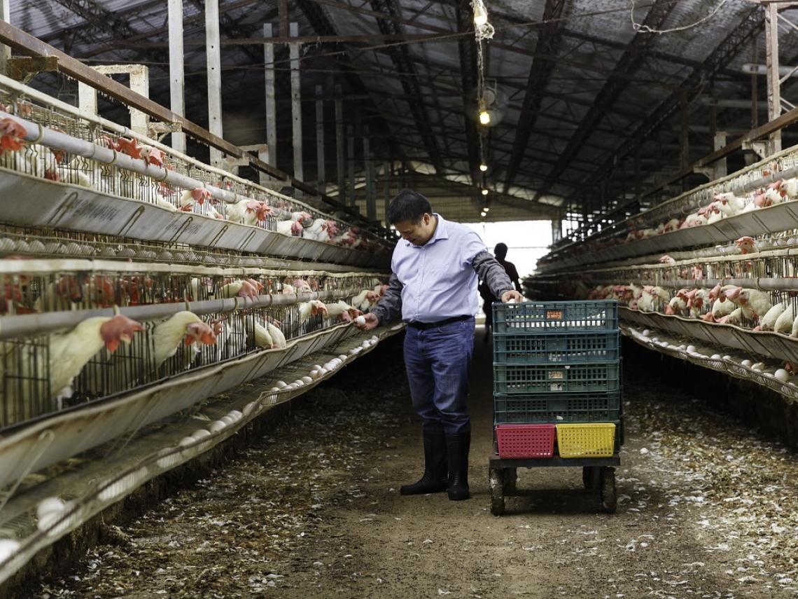 曾霸氣說要「賣蛋賣到股票上市」…蛋商「好華雞」不敵疫情,遭拖款2千萬,黯然暫停網購雞蛋