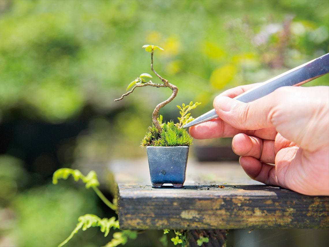 小空間打造大花園   宅園藝x綠風潮