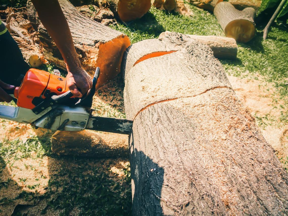 山都可以挖了,難道樹木不能砍嗎?