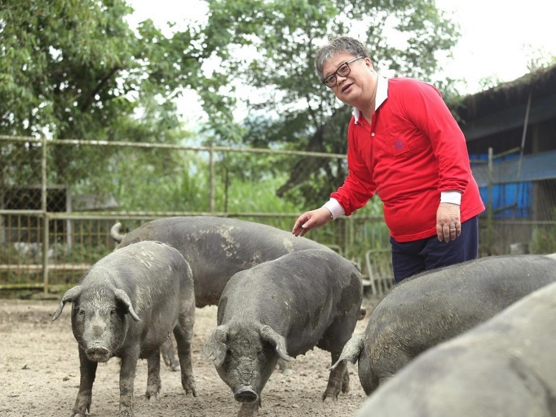 「陪豬睡覺」他學會什麼? 福壽實業董事長洪堯昆:「先顧好豬,才能顧好企業!」