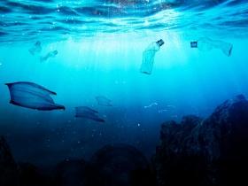 世界海洋日,喚起海洋保育的關注