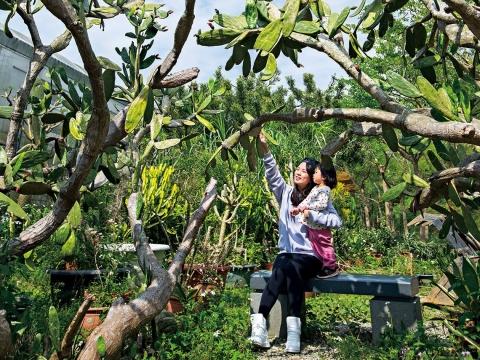 帶你幸福逛》日式老屋品茶喝咖啡、探訪濕地動植物,4個新竹小景點輕鬆走、零負擔