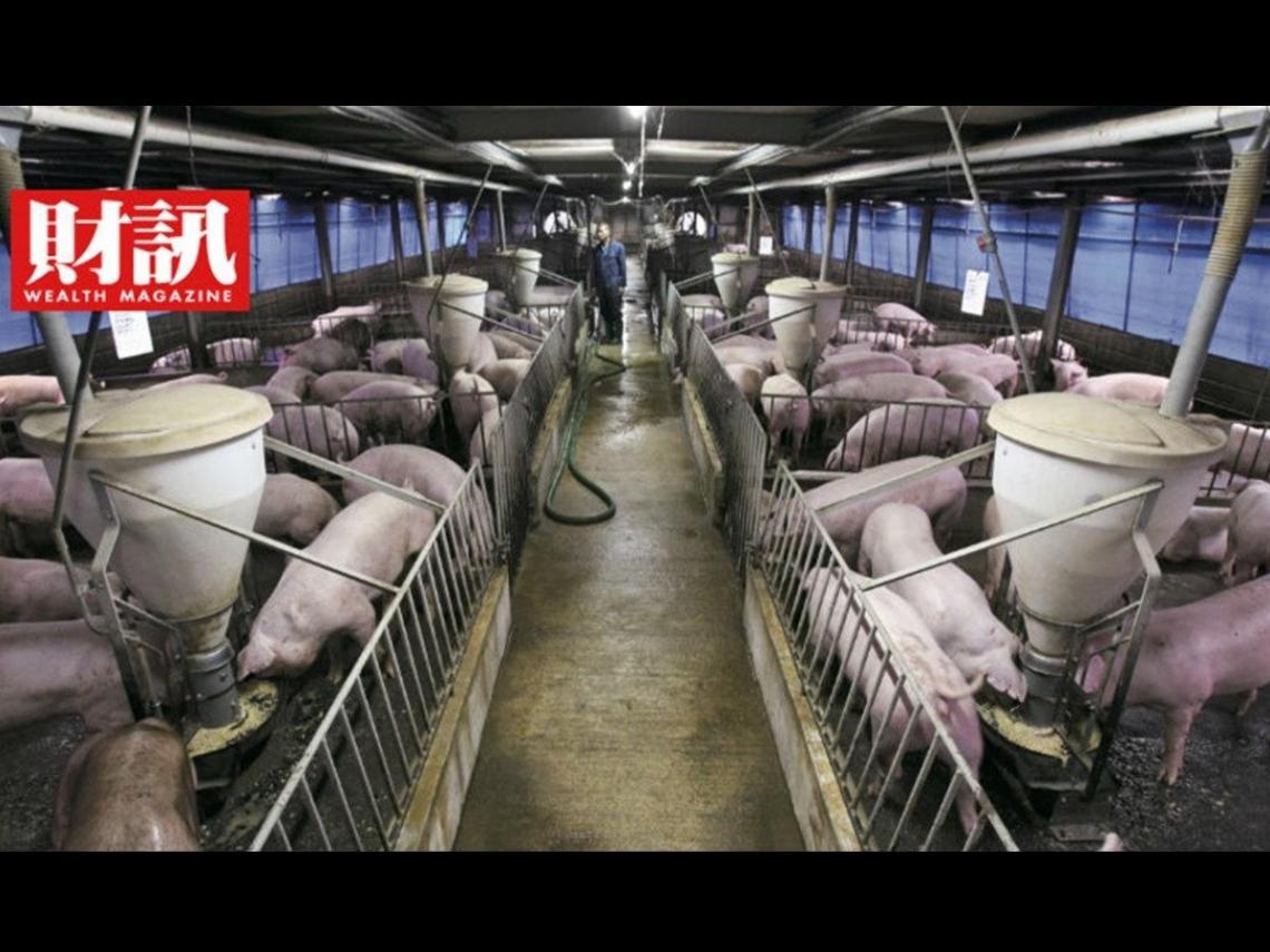 終結23年夢魘、列名亞洲唯二口蹄疫非疫區 瞄準外銷百億商機,台灣需要一個豬肉國家隊