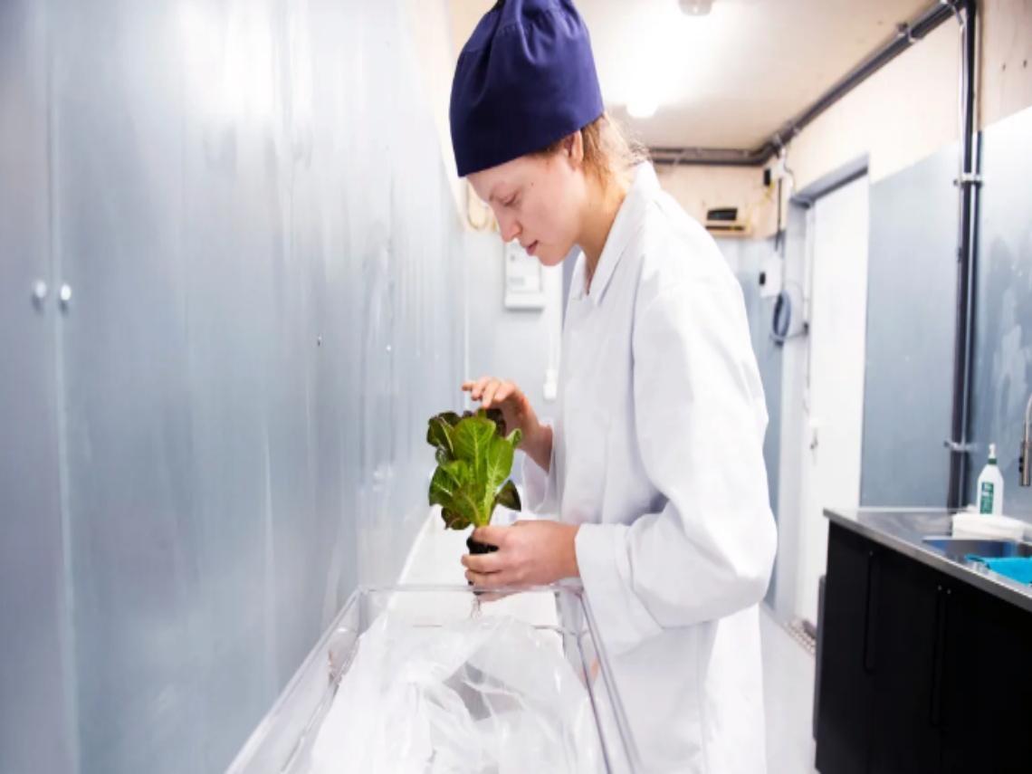 實現自給自足! IKEA在貨櫃裡種生菜,打造對氣候有益的「都市農耕」