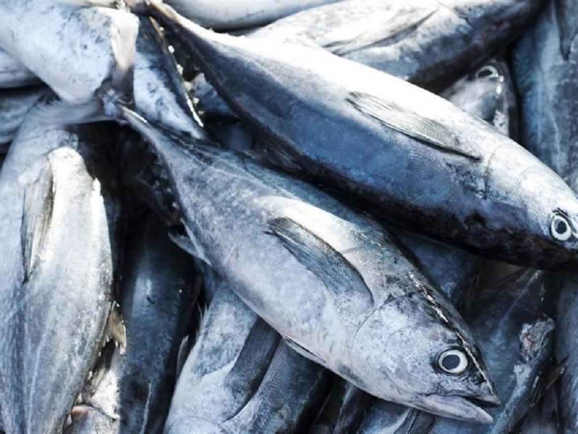 「新東陽魚鬆」被港驗出汞超標 食藥署緊急追查源頭檢驗
