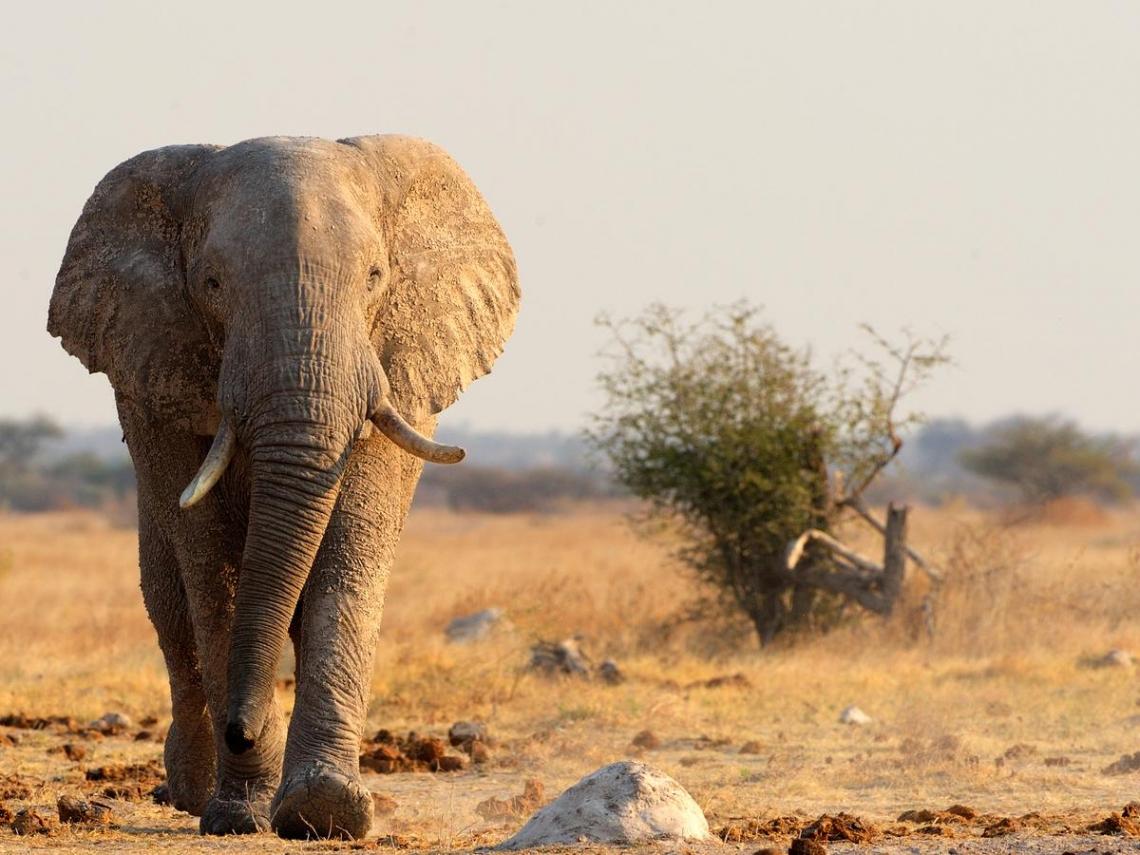 被虐待的動物、村落孤兒竟成旅遊景點...全球最大冒險旅遊公司「無畏旅遊」創辦人的痛心反省