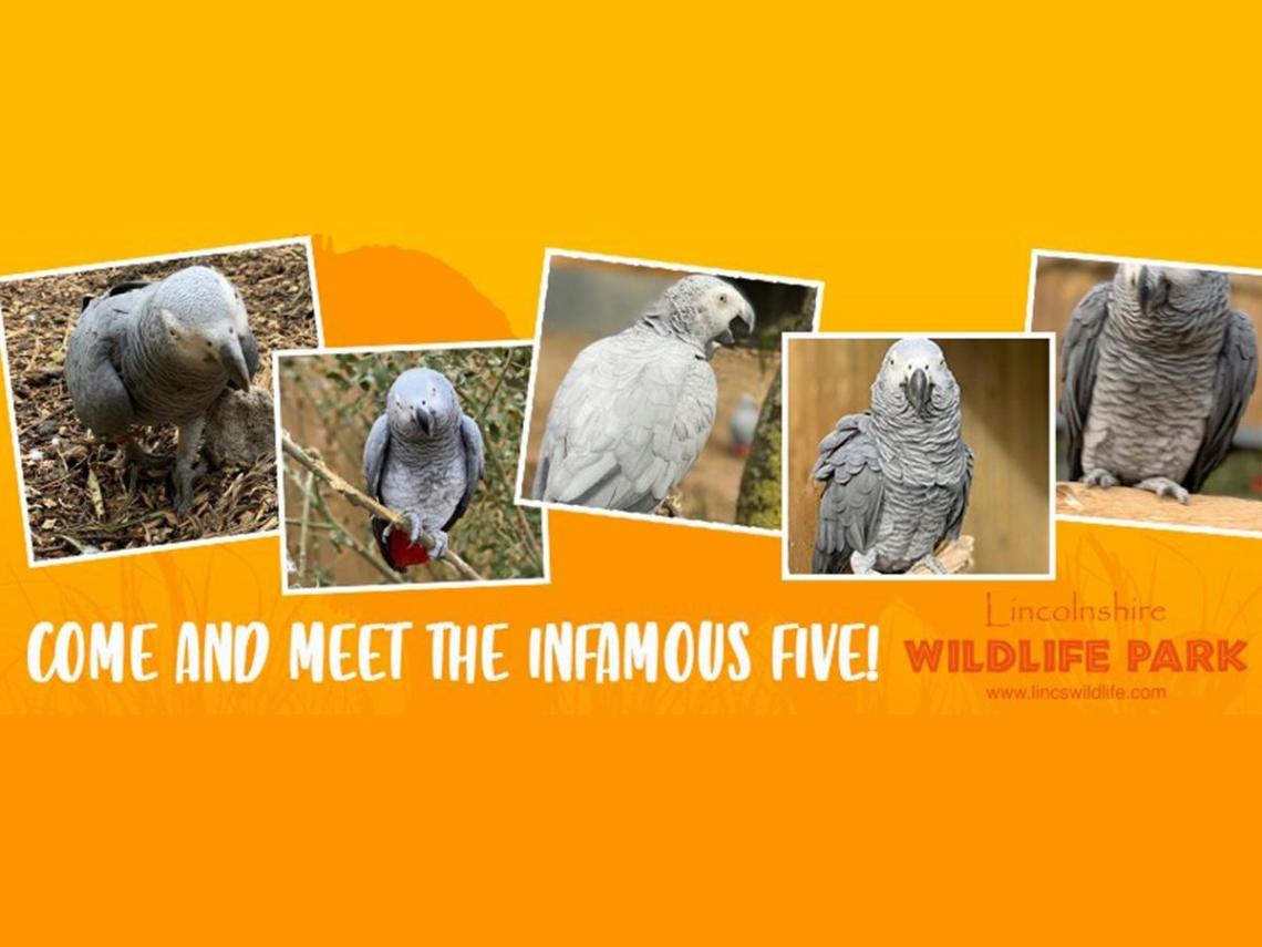 去旁邊冷靜!動物園5隻鸚鵡意外組「髒話團」 集體天天飆罵被迫「解散單飛」