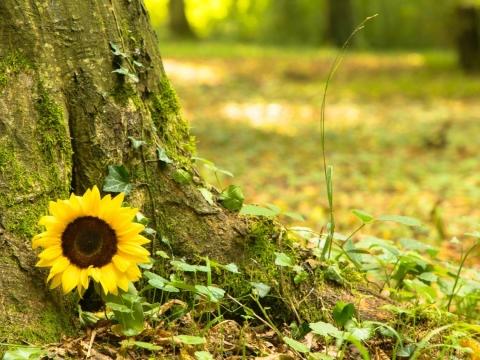 簡單安葬,才能安心說再見!3種愛地球的「綠色殯葬」歸於土地,永續循環更安心