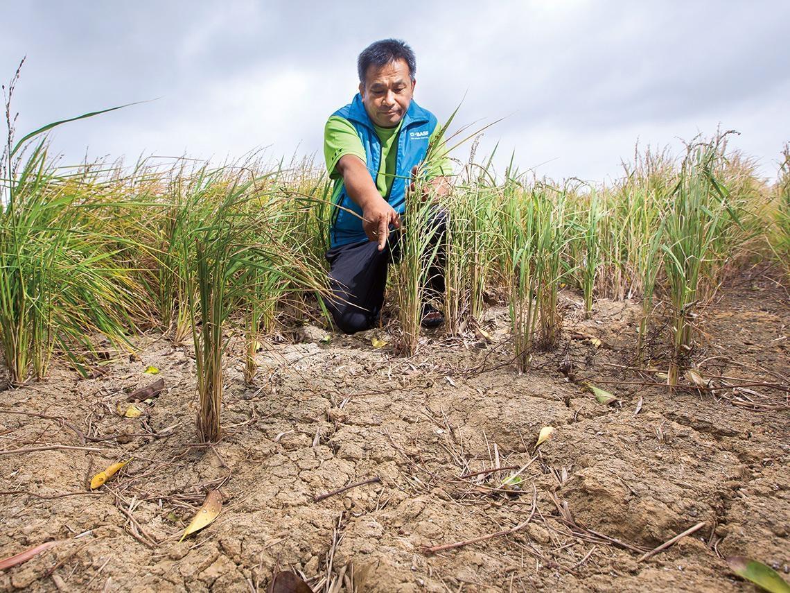 農水署剛掛牌 為何就害農民損失慘重?