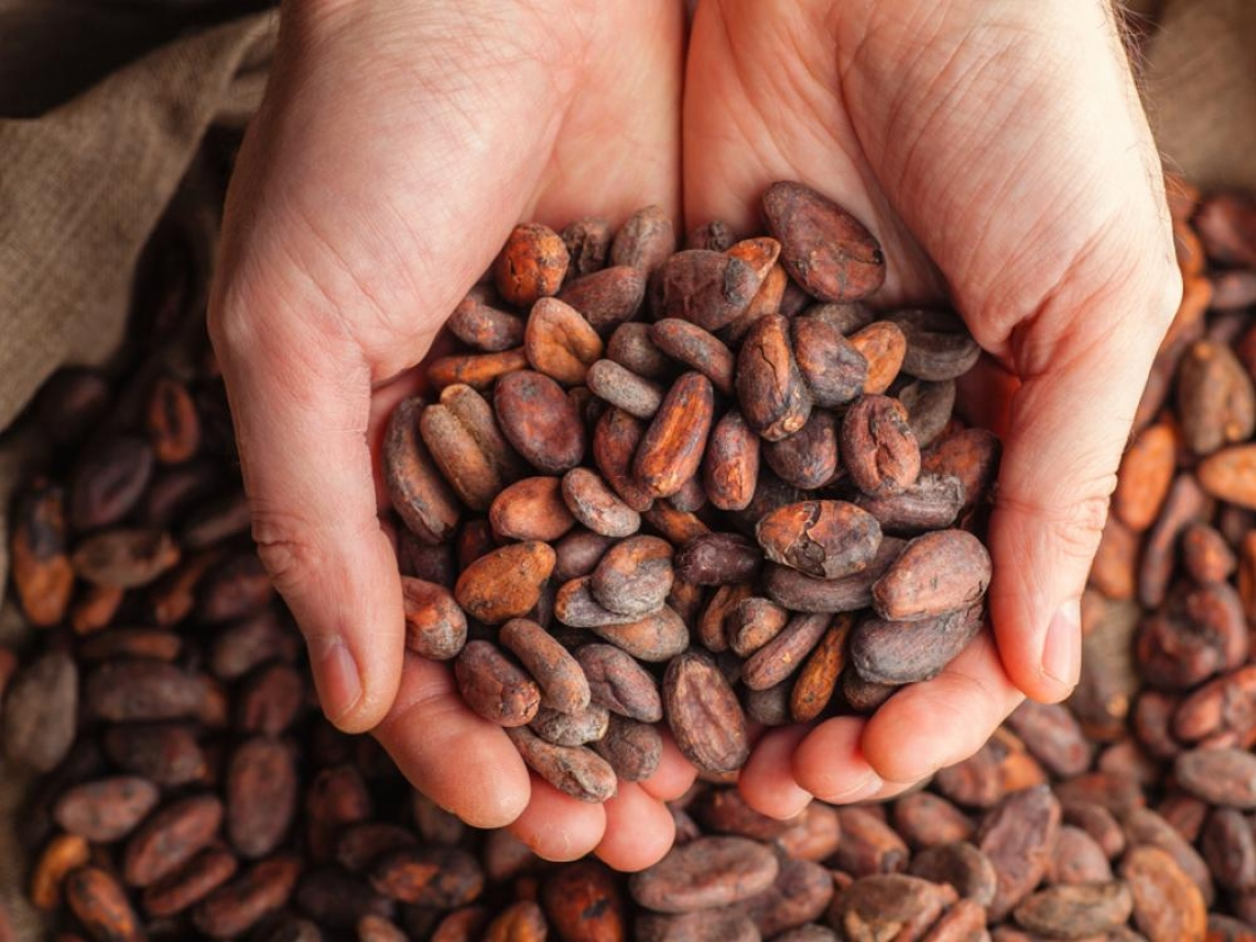 屏東可可戰士出列!35面「世界巧克力」獎牌留台灣 網路最夯「30大巧克力」名單出爐
