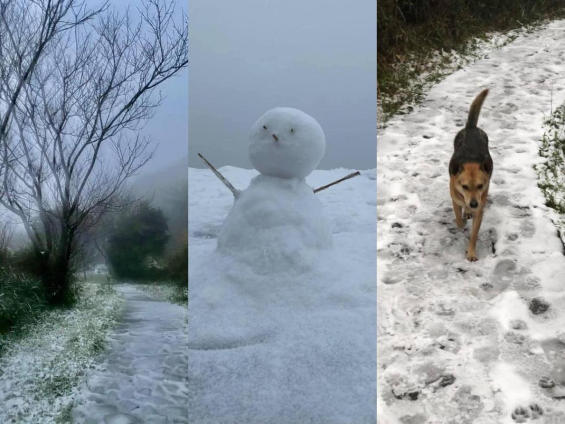 【像極了日本】七星山、武陵降雪!白茫茫一片 堆雪人、狗狗狂踏超開心