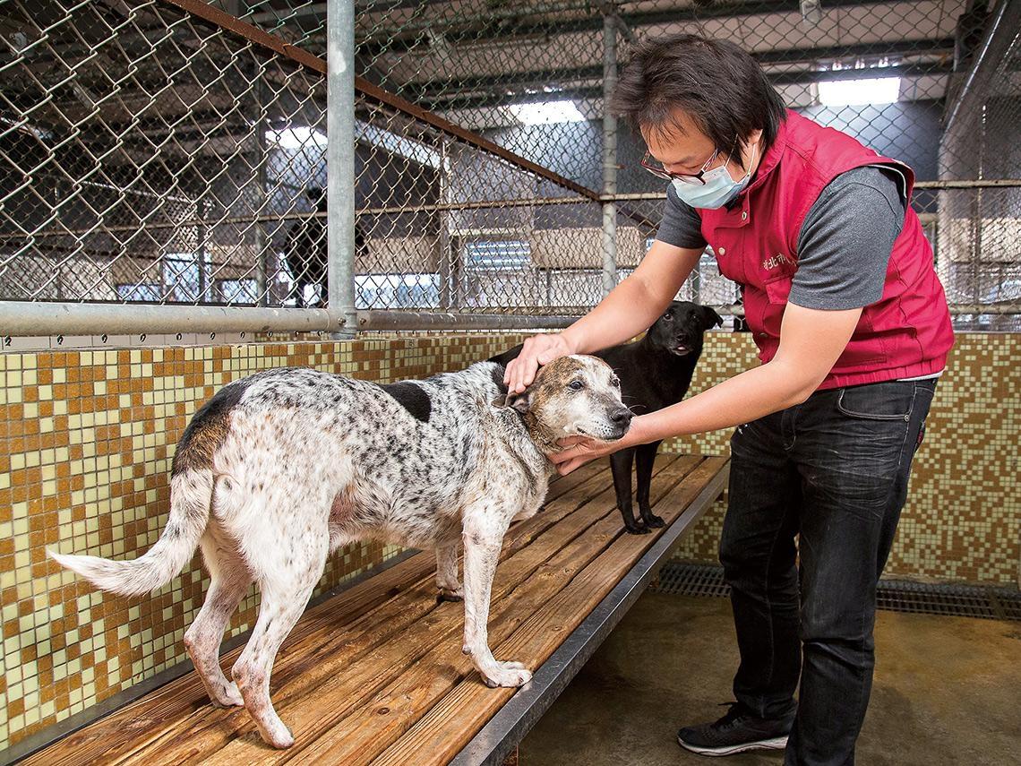 虐待動物等同刑事案件  設「動保警察」拯救毛小孩