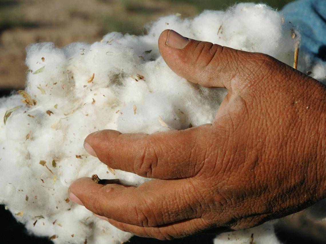 新疆棉真是機械採?「被自願者」自白曝光 血淚字句踢爆強迫勞動真相