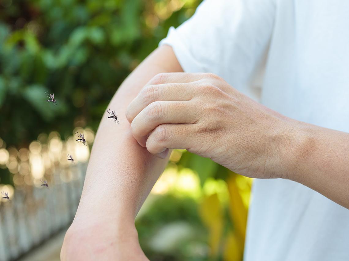 酸性體質易被叮咬?O型血是蚊子最愛?破解防蚊四迷思 有效滅蚊這樣做