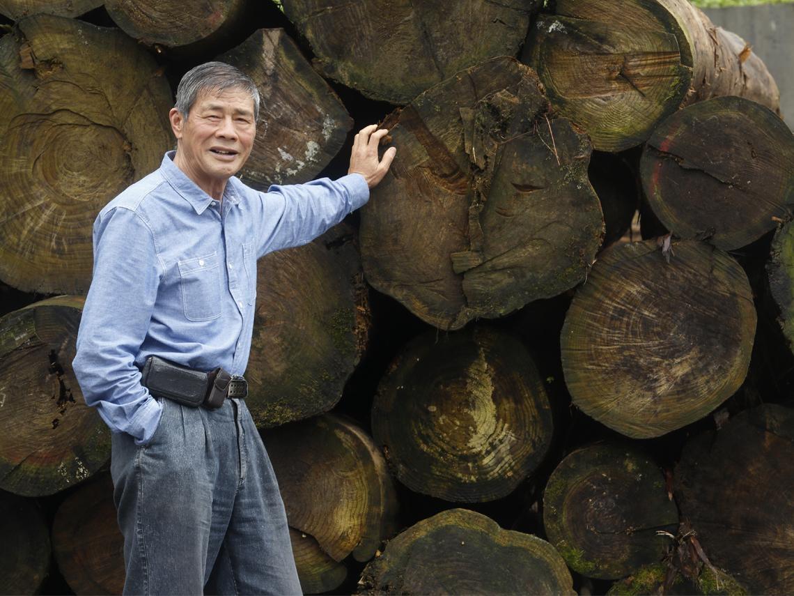 他種出環保木材  力拚本土林業復活
