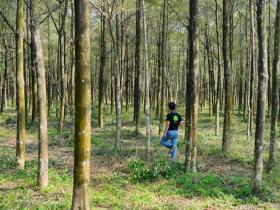造林與光電》一場美麗的誤會:台糖上萬公頃造林何去何從?