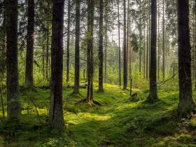 綠電太難買,想彎道超車?三分鐘帶你看懂森林碳權