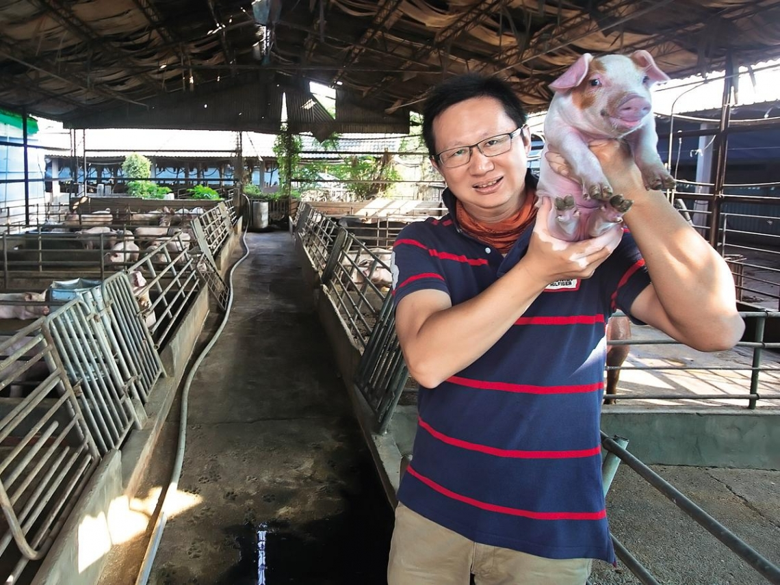 醜農作當飼料  花田喜彘意外養出胡蘿蔔豬