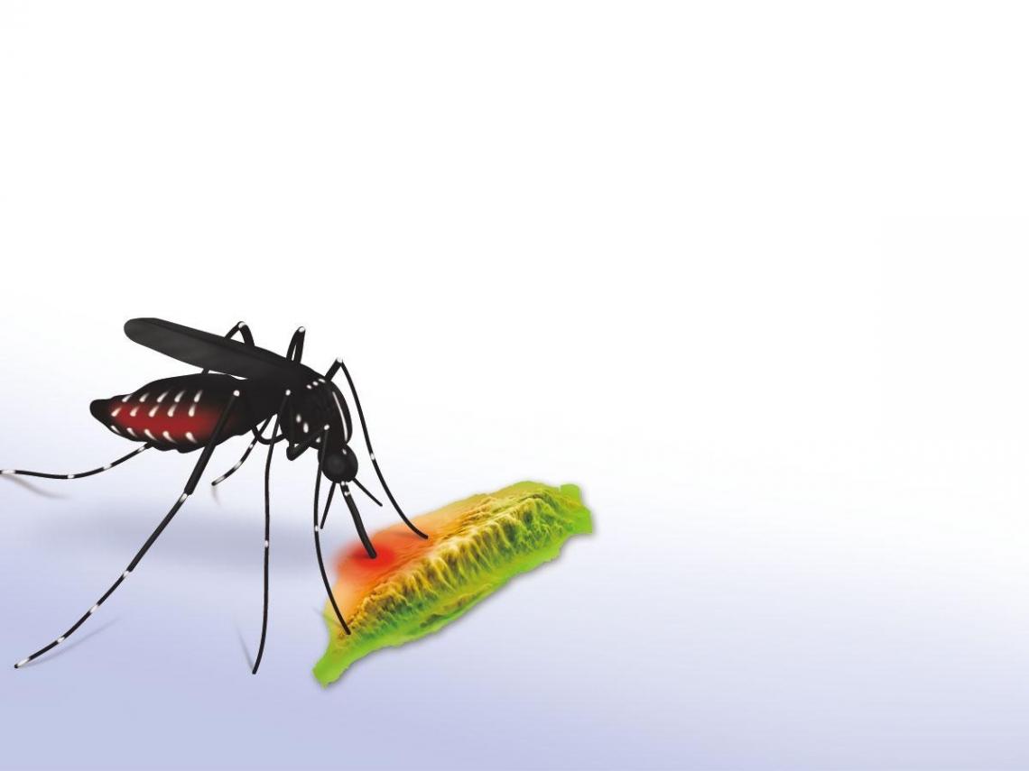 一隻蚊子的危機總動員