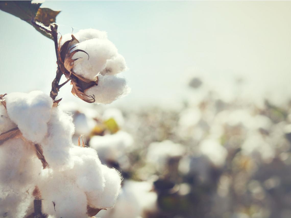 為什麼棉花離不開奴隸?