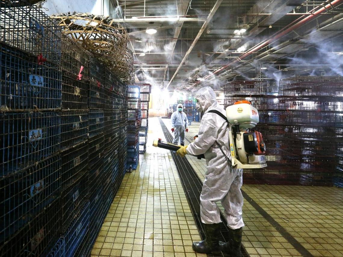 禽流感防疫  病毒資訊不能只做半套