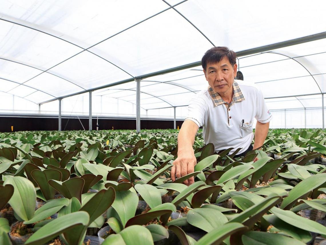 中國蘭花教父:要出口蝴蝶蘭 不如回台南做!