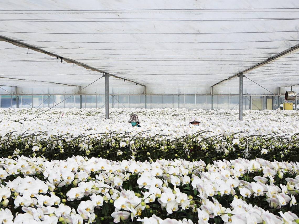 勇敢開放 正面迎戰中國農產品競爭