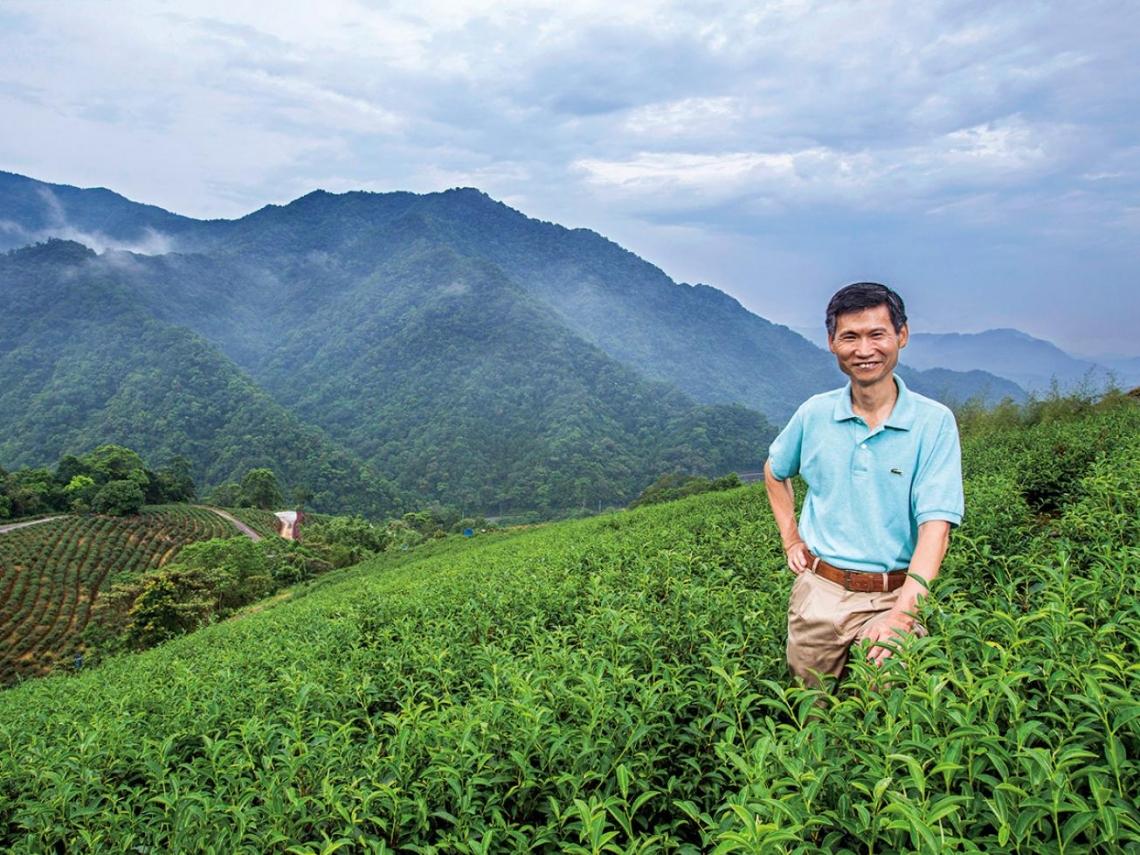 老吉子茶行鄭添福 把製茶當修行的人生